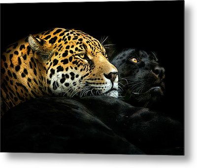 Ebony And Ivory Metal Print by Pedro Jarque