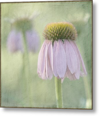 Echinacea Coneflower Metal Print by Juli Scalzi
