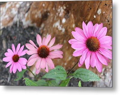 Metal Print featuring the photograph Echinacea by Jesslyn Fraser