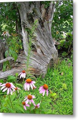 Echinacea Stumpage Metal Print