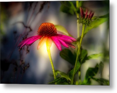 Echinacea Sunrise Metal Print by Bob Orsillo