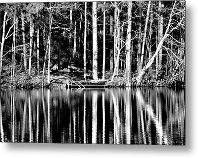Echoing Trees Metal Print by Tara Potts