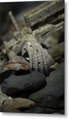 Metal Print featuring the photograph Ecphora Gardnerae by Rebecca Sherman