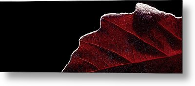 Edge Of Autumn Metal Print
