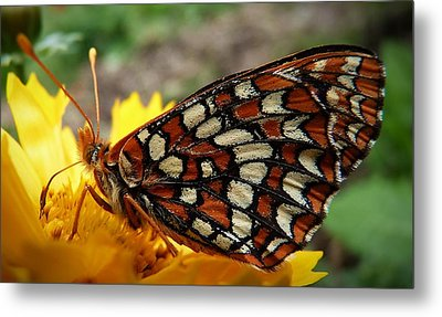 Metal Print featuring the photograph Edith Checkerspot by Julia Hassett