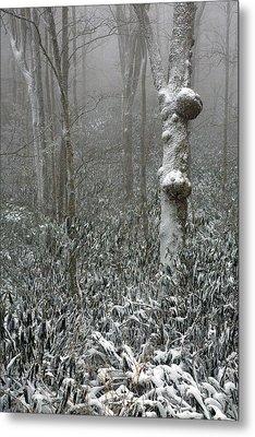 Eerie Forest Winter Metal Print by John Haldane