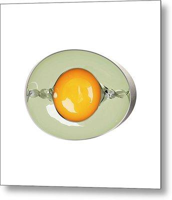 Egg Anatomy Metal Print by Claus Lunau
