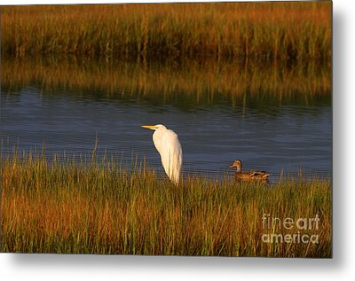 Egret And Duck Metal Print