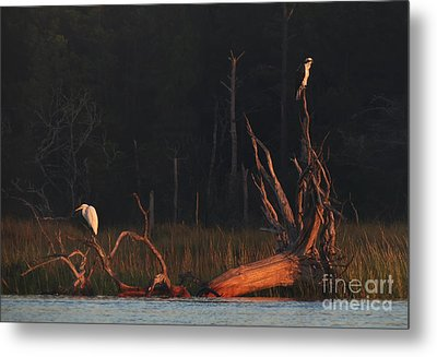 Metal Print featuring the photograph Egret And Osprey Sunrise by Deborah Smith