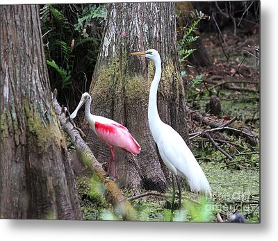 Egret And Spoonbill Metal Print by Theresa Willingham