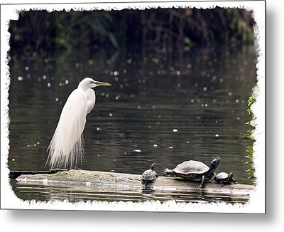Egret And Turtles Metal Print