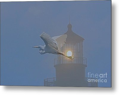 Egret At Hatteras Metal Print
