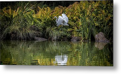 Metal Print featuring the photograph Egret At The Lake by Chris Lord