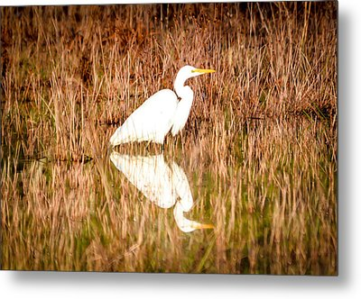 Egret Basking In The Morning Sun Metal Print