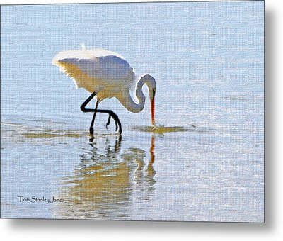 Egret Catches A Fish Metal Print by Tom Janca