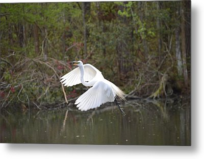 Over The Lagoon Metal Print