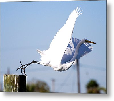 Metal Print featuring the photograph Egret In Flight by Linda Cox