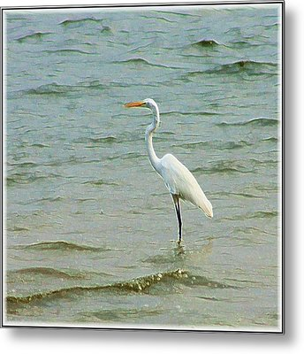 Egret In The Shallows Metal Print