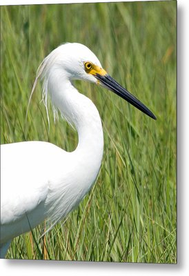 Metal Print featuring the photograph Egret In The Sound by Greg Graham
