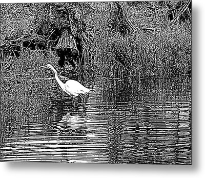 Metal Print featuring the photograph Egret On The Move by Suzy Piatt