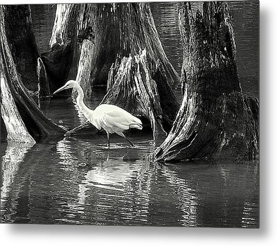 Egret Solitude Metal Print by Suzy Piatt