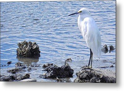 Egret Standing Perfectly Still Metal Print