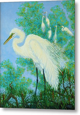 Egrets In Rookery - 20x16 Metal Print by Dwain Ray