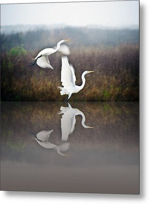 Egrets In The Fog Metal Print by John Collins