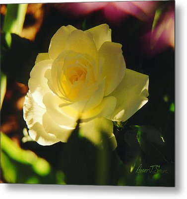 El Salto Rose - Lemonwhippedcream One Metal Print by Robert J Sadler