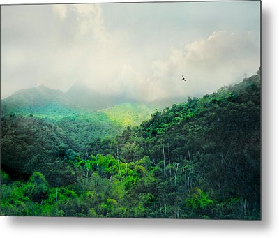 El Yunque National Rain Forest Metal Print by Diana Angstadt
