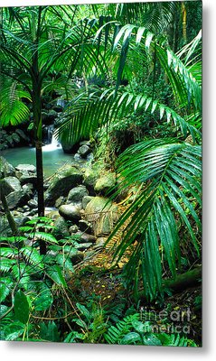 El Yunque Palm Trees And Waterfall Metal Print by Thomas R Fletcher