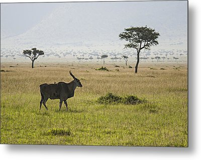 Metal Print featuring the photograph Eland In Masai Mara by Antonio Jorge Nunes