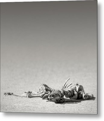 Eland Skeleton In Desert Metal Print by Johan Swanepoel