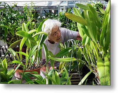 Elderly Woman Examining Plants Metal Print