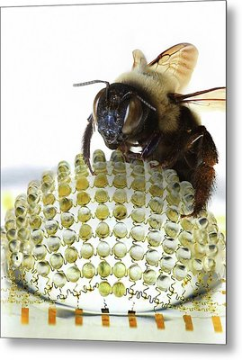 Electronic Compound Eye With Bee Metal Print by Professor John Rogers, University Of Illinois