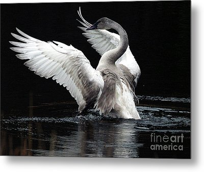 Elegance In Motion 2 Metal Print by Sharon Talson