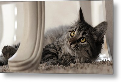 Metal Print featuring the photograph Elegance by Silke Brubaker