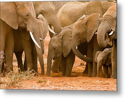 Elephant At The Hotspot Metal Print