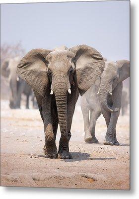Elephant Bathing Metal Print