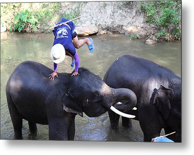 Elephant Baths - Maesa Elephant Camp - Chiang Mai Thailand - 011331 Metal Print by DC Photographer
