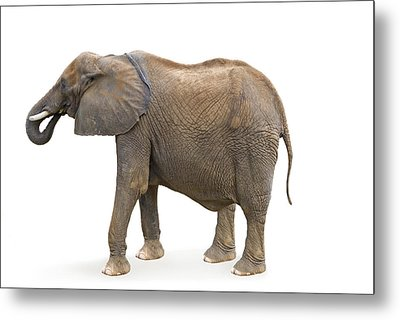 Metal Print featuring the photograph Elephant by Charles Beeler