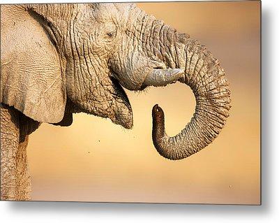 Elephant Drinking Metal Print by Johan Swanepoel