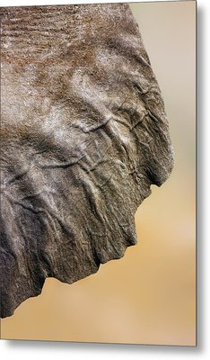 Elephant Ear Close-up Metal Print by Johan Swanepoel