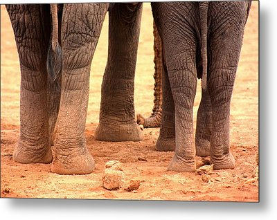Metal Print featuring the photograph Elephant Family by Amanda Stadther