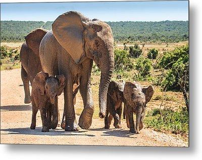 Elephant Family Metal Print
