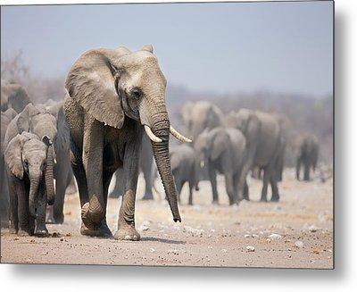 Elephant Feet Metal Print