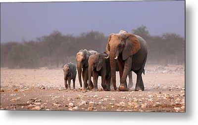Elephant Herd Metal Print by Johan Swanepoel