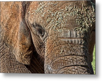 Elephant Never Forgets Metal Print by Miroslava Jurcik