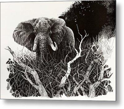 Elephant Metal Print by Paul Illian