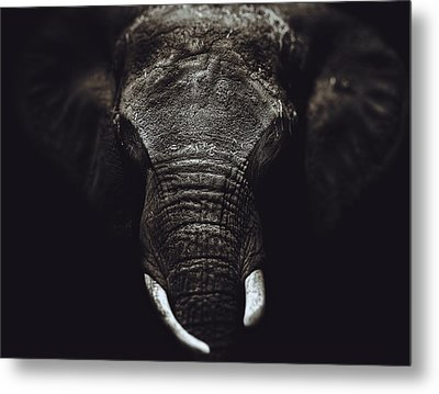 Elephant Portrait  Metal Print by Kenny  Noddin